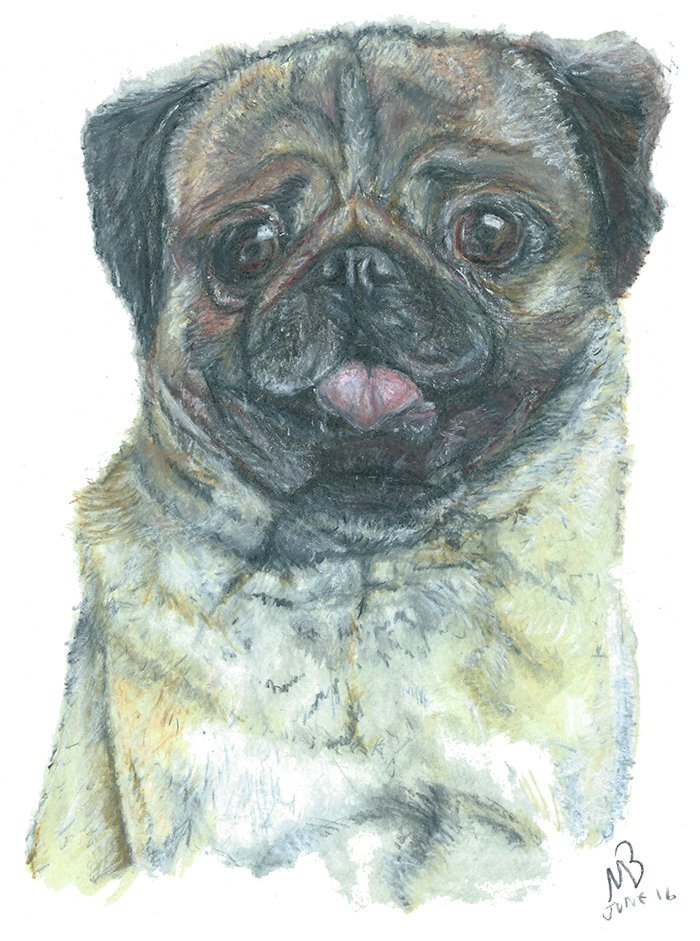 Drawing watercolor. Pug dog pencil dogs