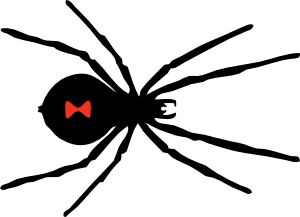 Drawing web face paint spider. Black widow clip art