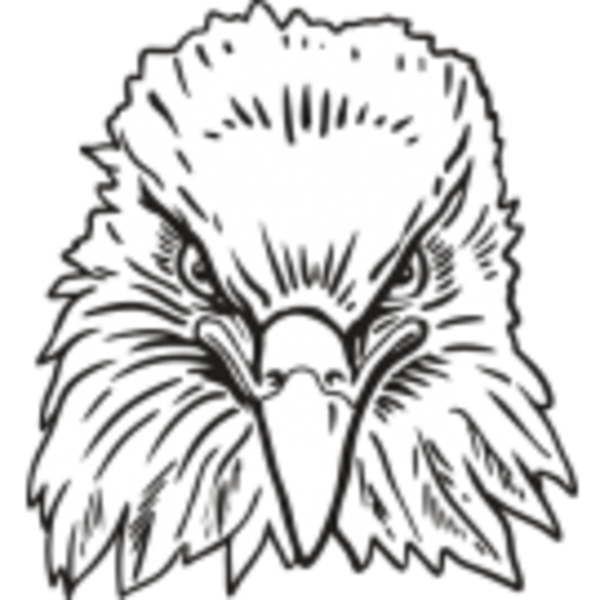 Drawing eagles front face. Eagle for free