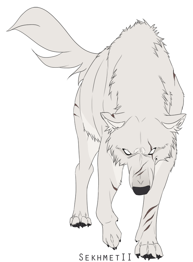 Pupil drawing wolf. Wolves white sekhmetii by