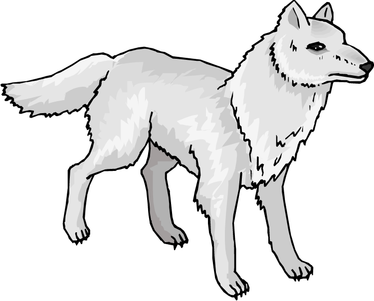 Drawing wolfs snow wolf. Arctic clipart