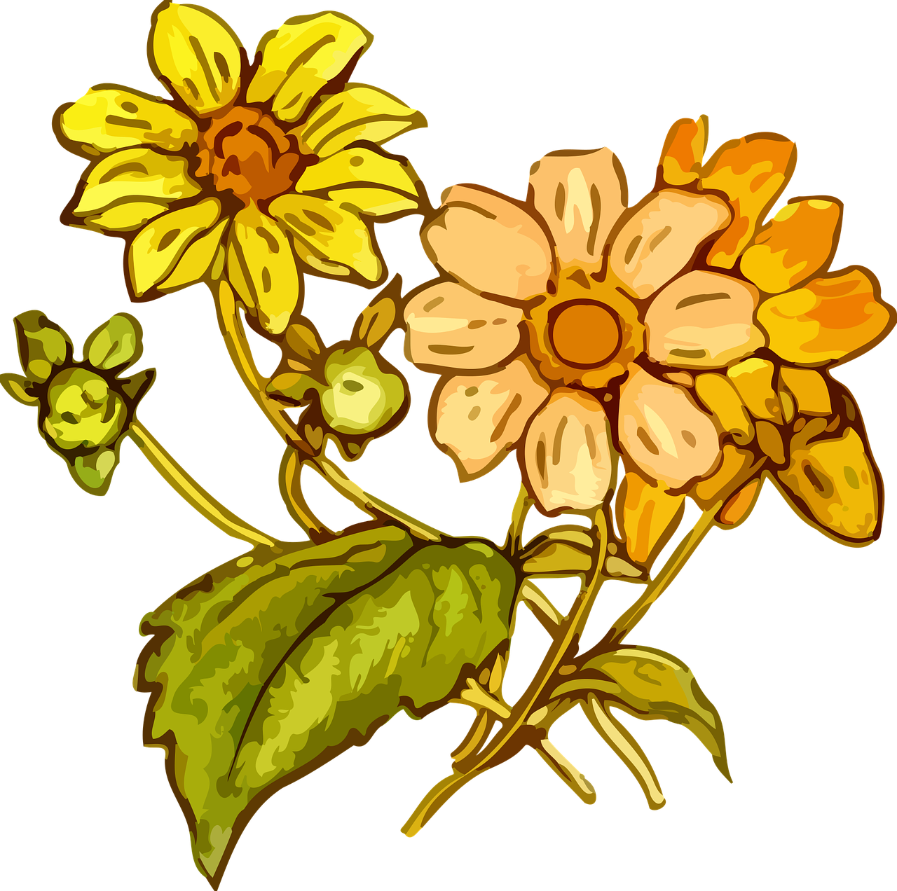 Drawn flower png. Image wildflowers drawing the