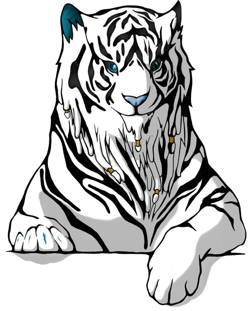 The white tiger by. Drawing tigers png