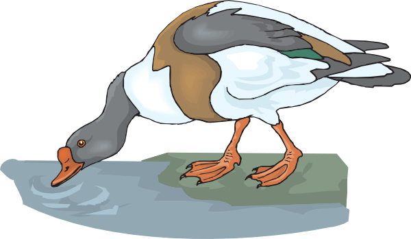 Drinking clipart. Duck clip art at