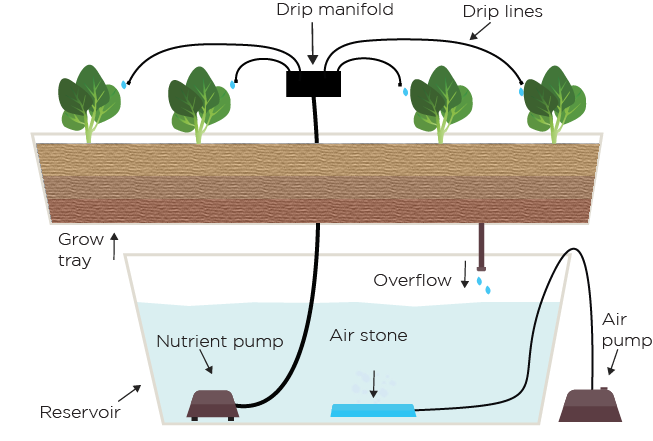 Drip lines png. Hydroponic system explained green