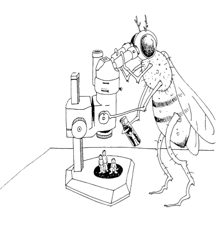 Drosophila drawing worst nightmare. Alina kol alinakol on