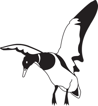 Vector duck wing. Black white bird wings
