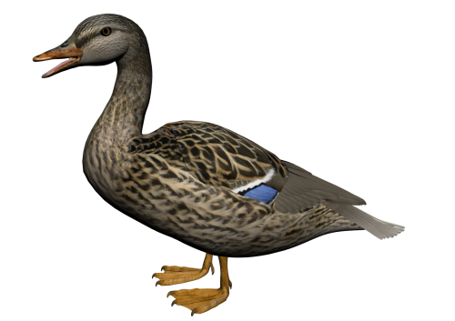 Duck .png. Png transparent images all