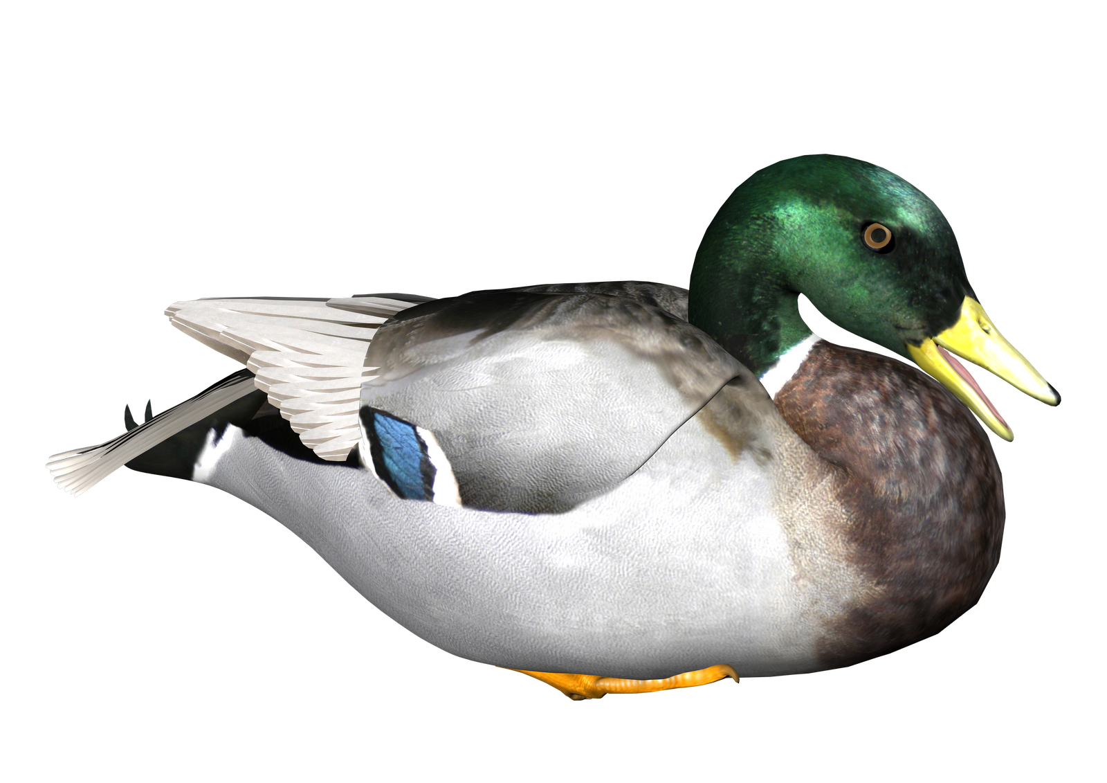 Pond transparent duck. Background png mart