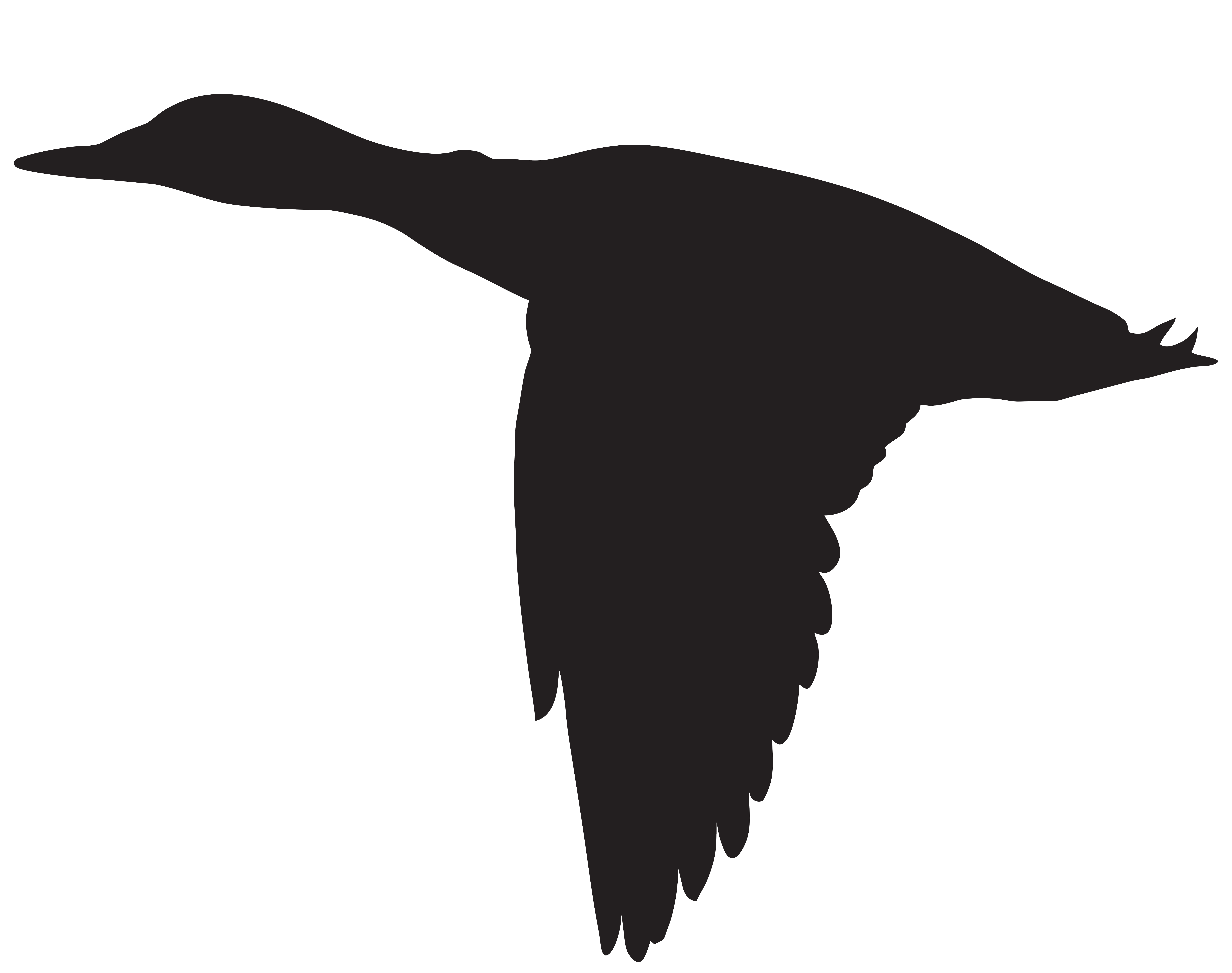 Vector duck in flight. Flying silhouette png clip