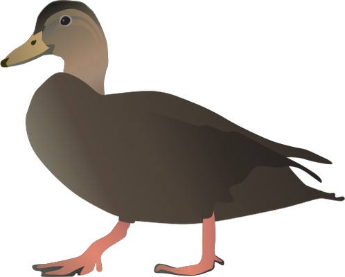 Vector duck art. Free download clip on