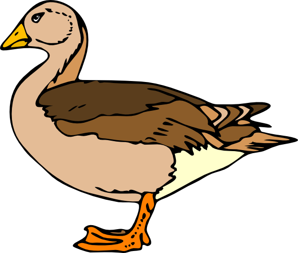 Baby duckling clipart at. Vector duck wildlife png transparent