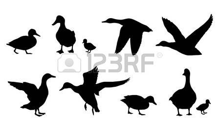 Ducks clipart baby goose. Duck silhouettes on the