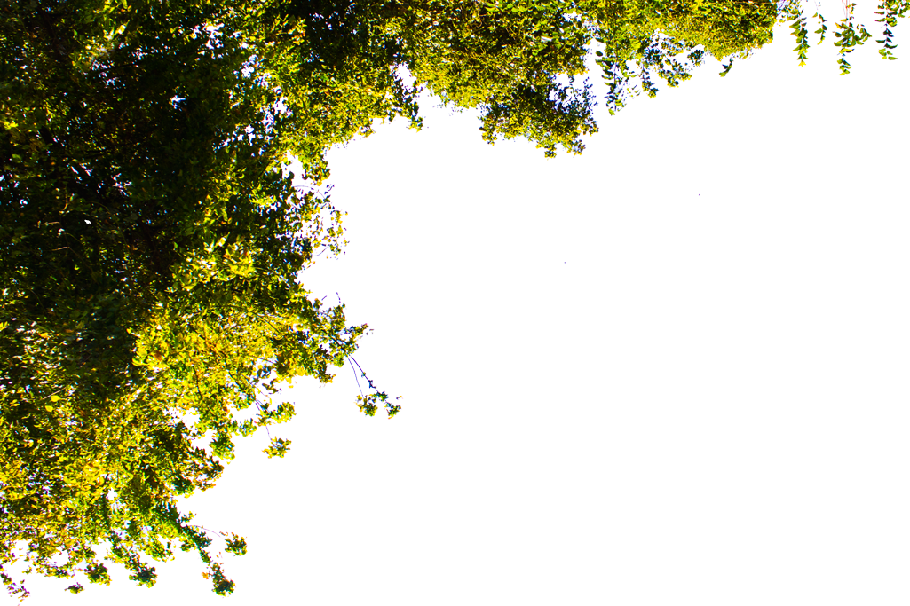 Dust particles in sunlight png. Free images blender branch