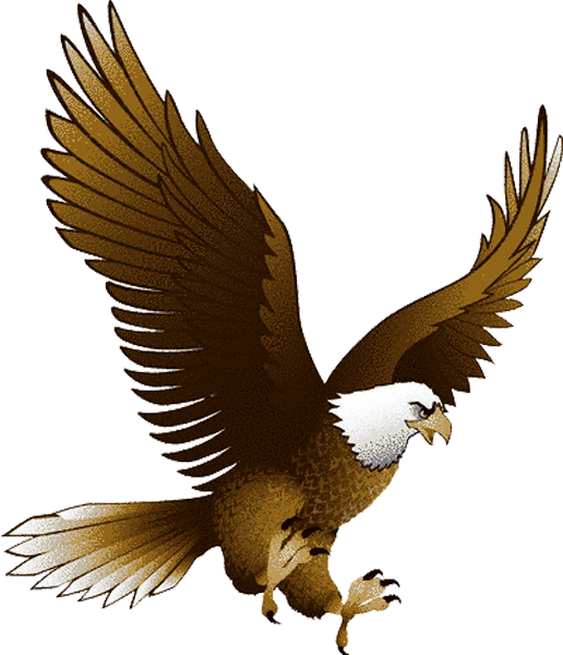 Eagle clipart baby eagle. Bald