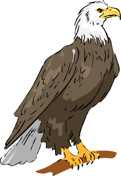 Eagle clipart baby eagle. Free