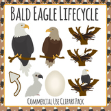 Eagle clipart life cycle. Of an teaching resources
