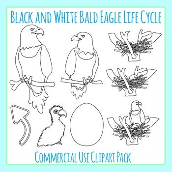 Eagle clipart life cycle. Bald in black and