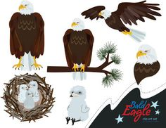 Eagle clipart life cycle. Jumping spider clip art