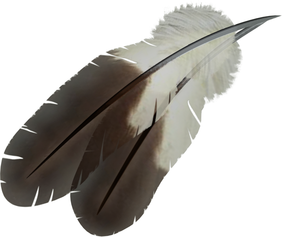 Indian feather png