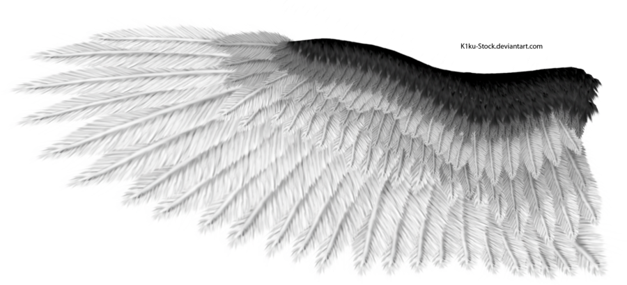 Eagle feathers png. Black and white wing