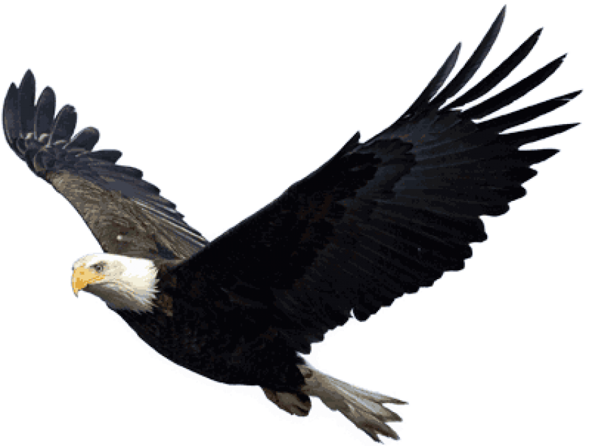 Eagle png. Free images toppng transparent