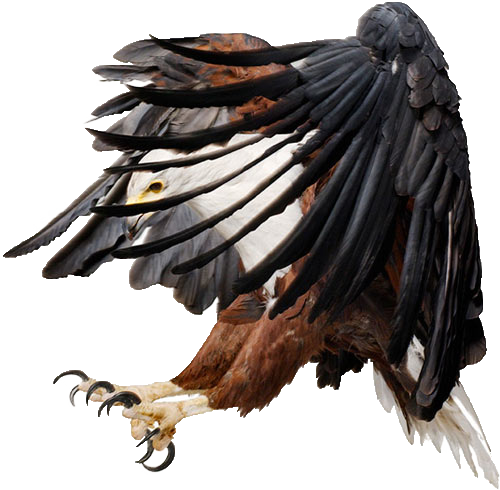 Eagle png. By lg design on