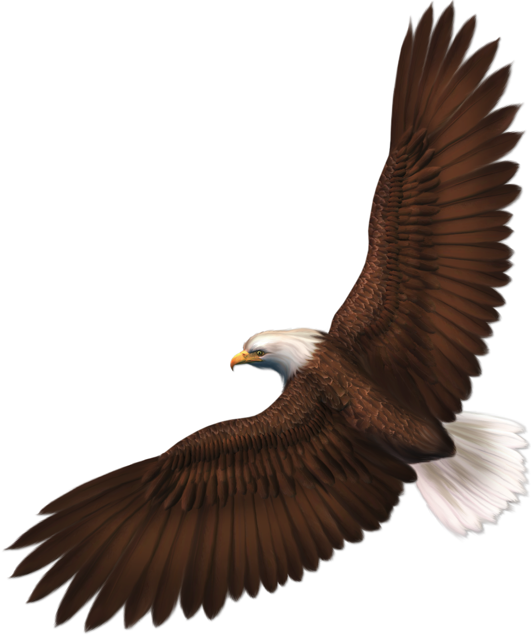 911 drawing eagle. Transparent png picture gallery