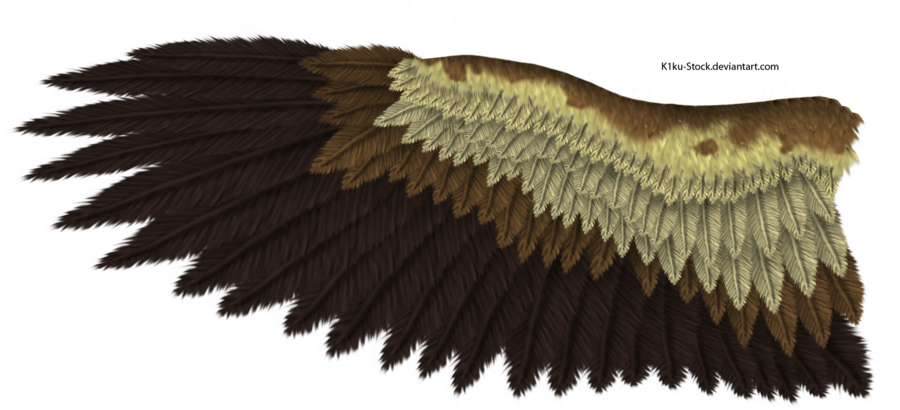 Eagle wing png. By k ku stock