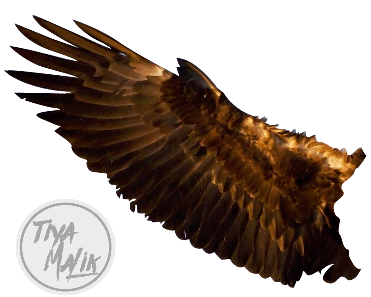 Eagle wing png. Wings by saltylittledreams on