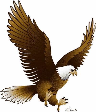 Soaring clipart outline. Different types of eagles
