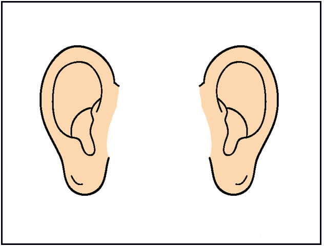 Ears clipart. Panda free images