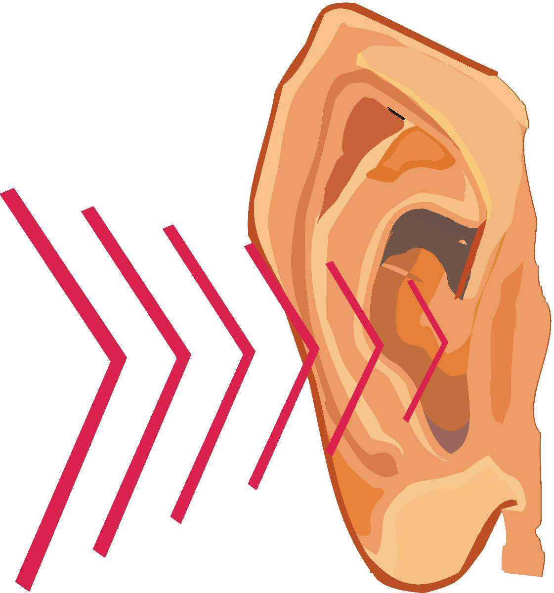 Ear clipart science sound. Sciencewiz how the works