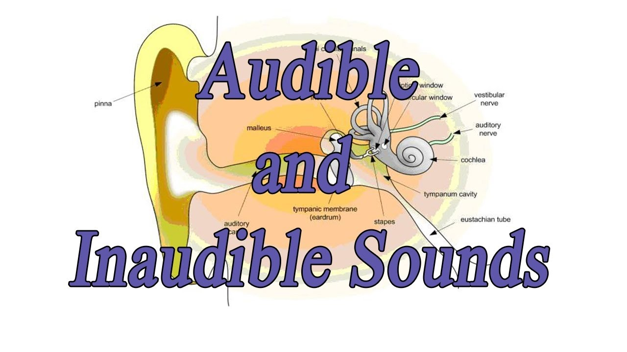 Ear clipart science sound. Class viii cbse