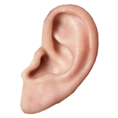 ear clipart small ear