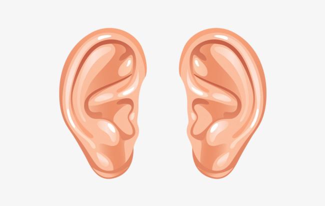 Ear clipart. Ears left and right