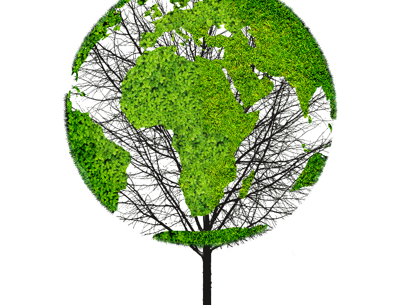 Earth texture png. World map green tree