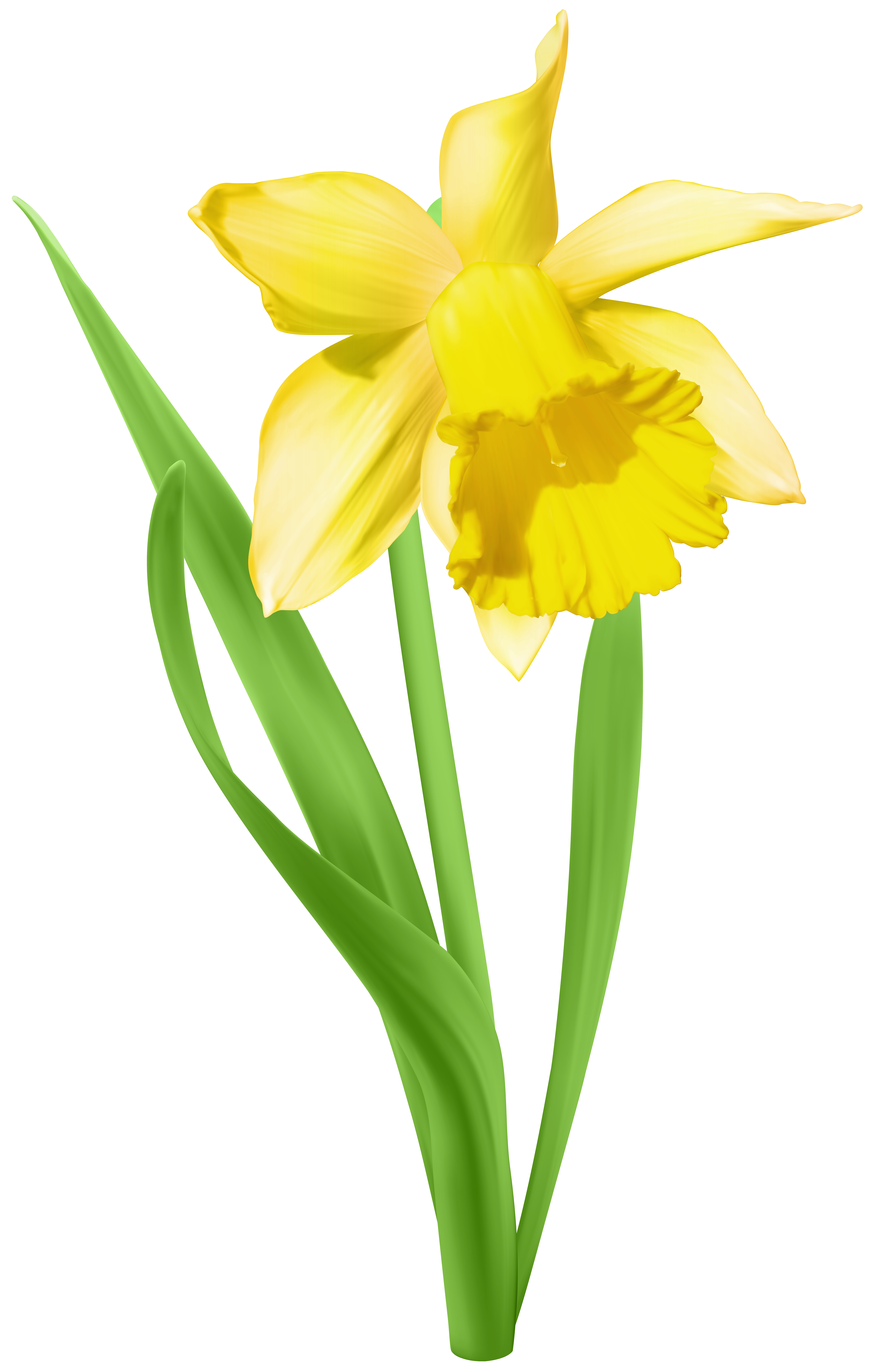 Transparent png clip art. Daffodil clipart easter image black and white stock