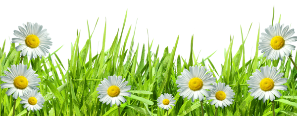 Easter grass png. With flowers by hanabell
