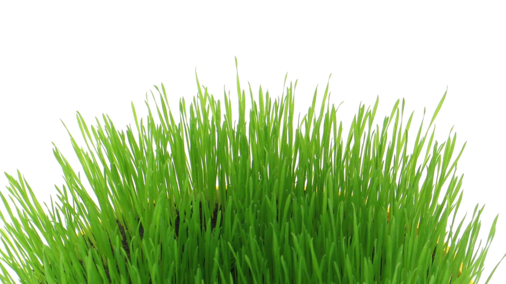 Easter grass png. Download transparent image peoplepng