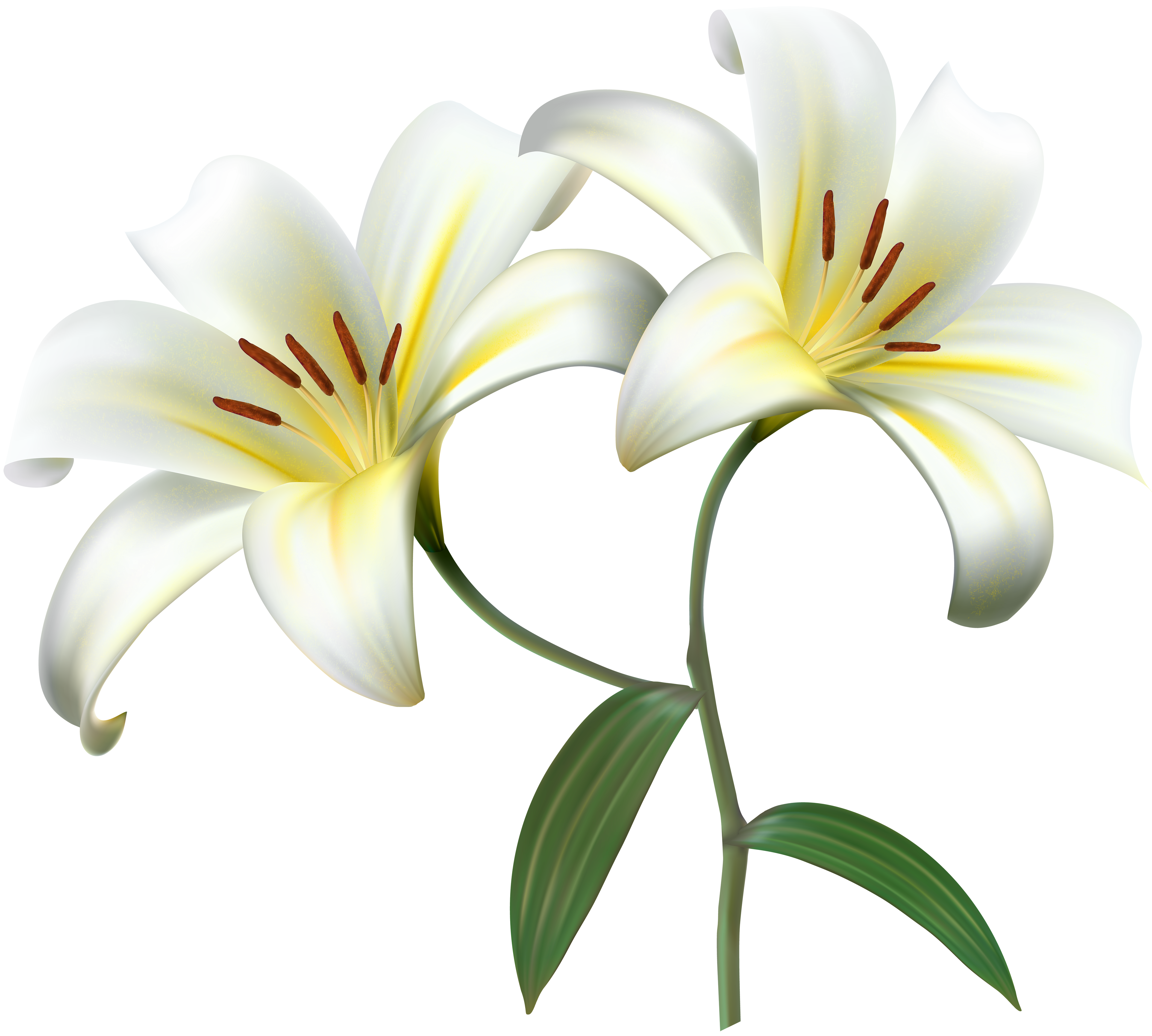 Easter lily garland png. White lilium flower decorative