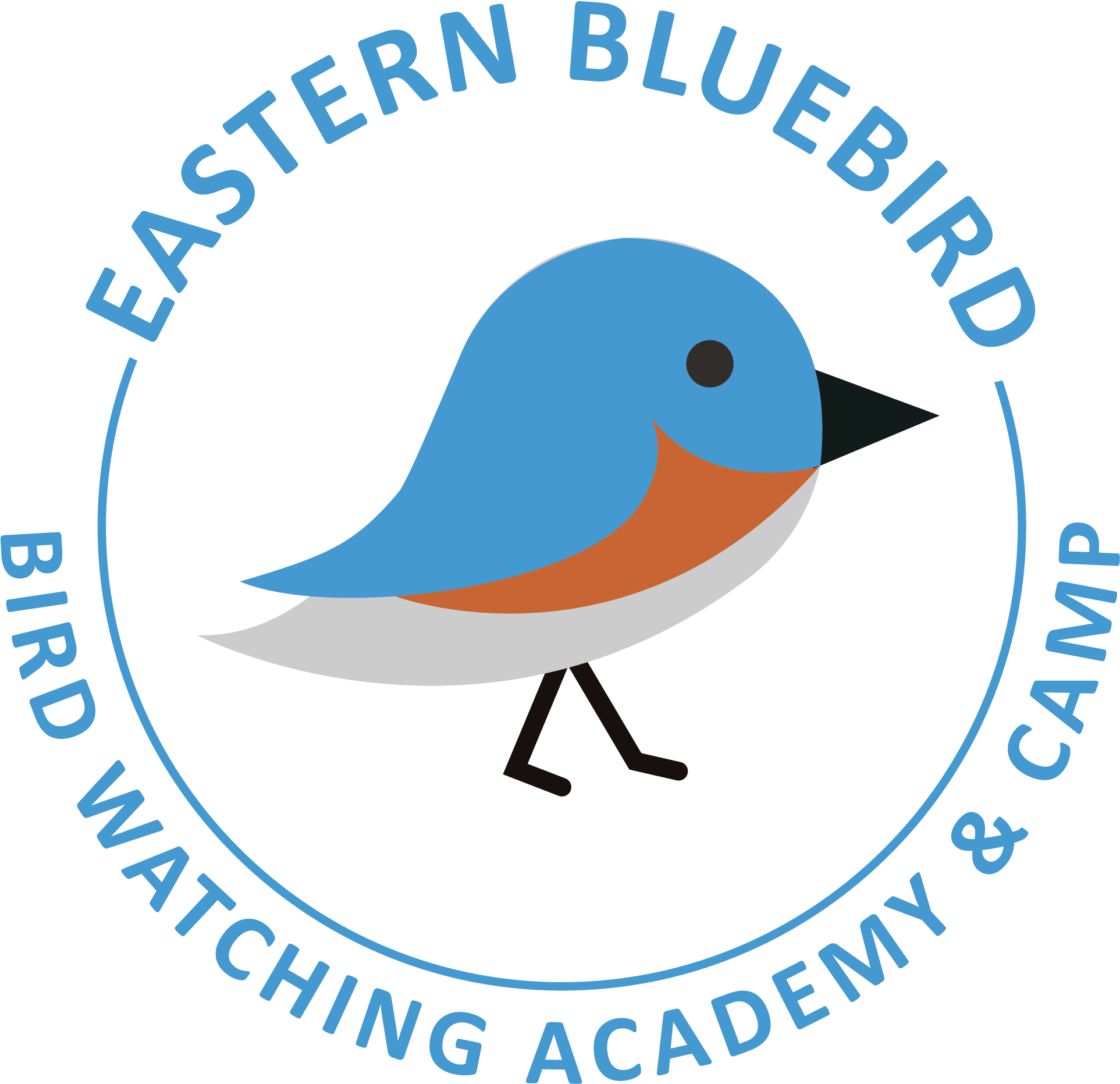 Eastern bluebird. Mountain download clipart on