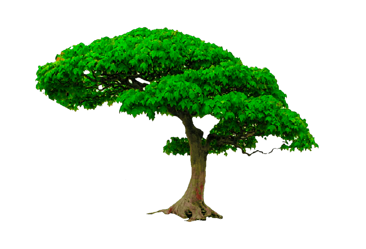 Png to photoshop. Tree editing cb edits