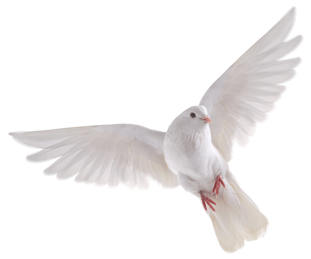 white birds png