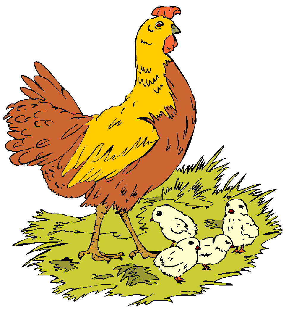 Hen clipart short animal. All about chickens kiddyhouse