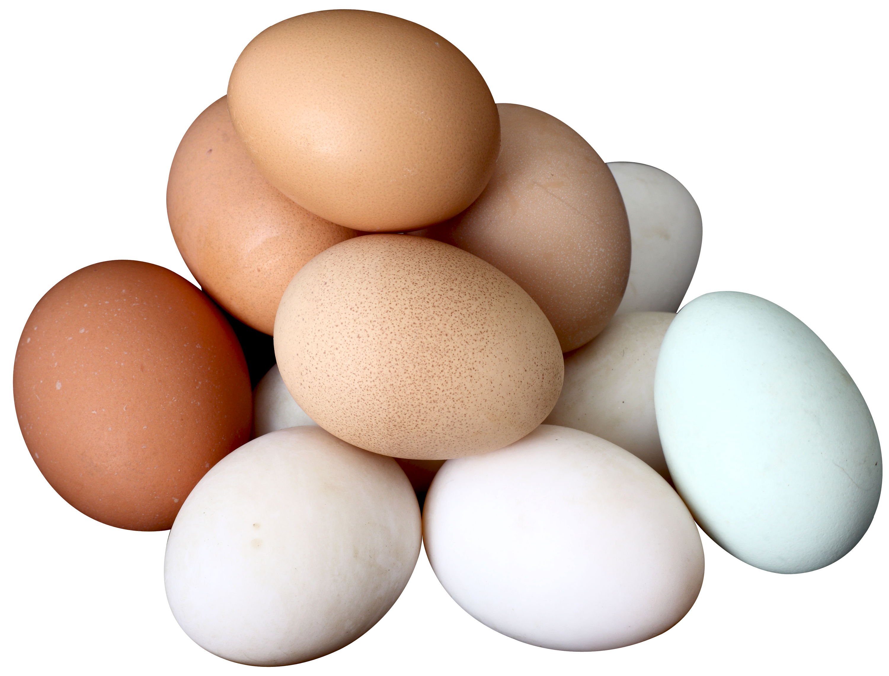 Eggs png. Image free download pictures