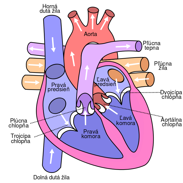 Ekg drawing unlabeled. Free heart diagram download
