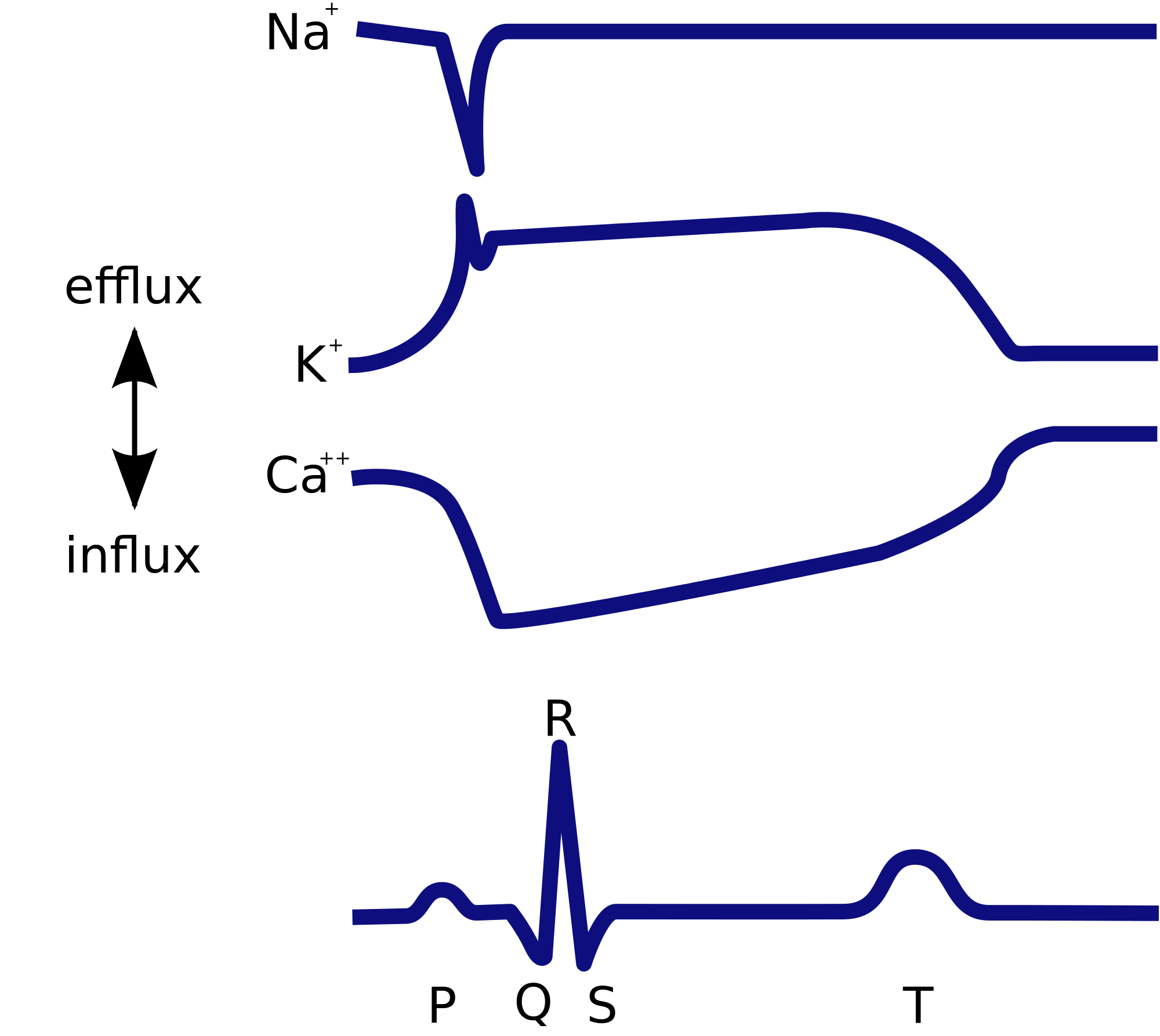 File cardiac cycle ions. Ekg svg png black and white