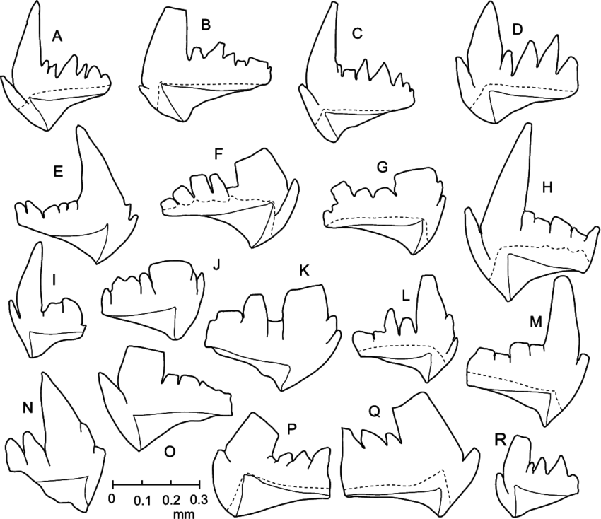 Camera lucida drawings of. Elements drawing clip art free download