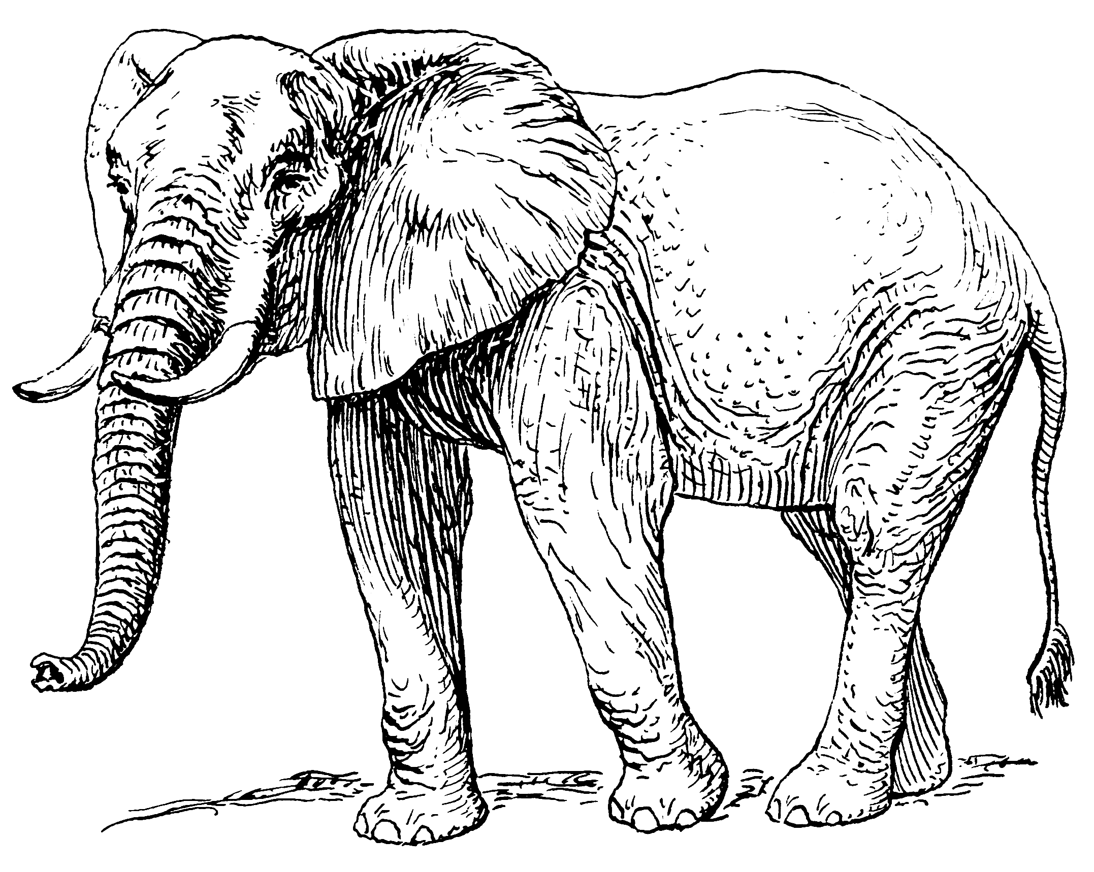 Food chain diet rivera. Elephant clip art african elephant clip art free library